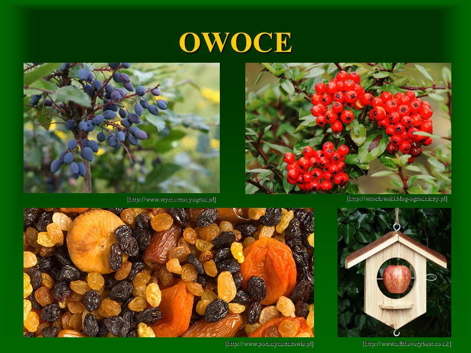 OWOCE [http://www.wymarzonyogrod.pl]
